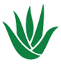 Aloe Vera Bebe Roosie Bugs Repellent