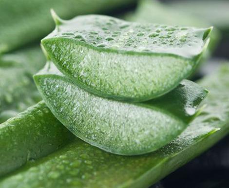 Bebe Roosie Bugs Repellent - Aloe Vera